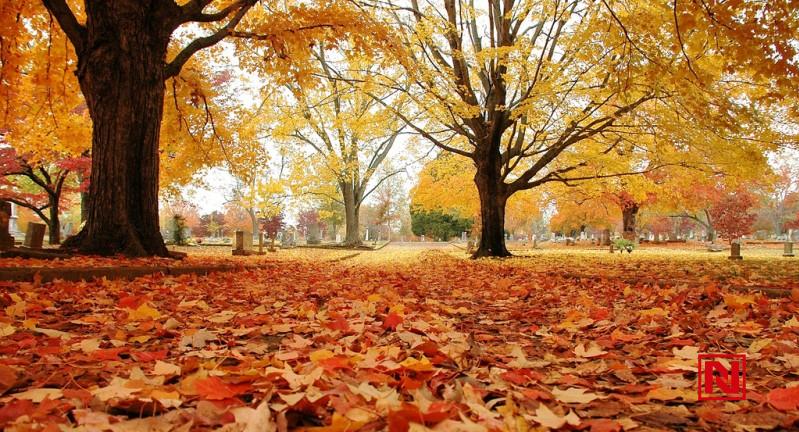 Outono começa nesta terça-feira (20)